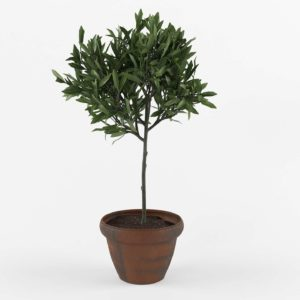 3D Olive Topiary Tree Ballard Design