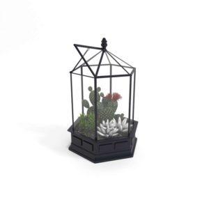 Terrario 3D de Cristal con Cactus