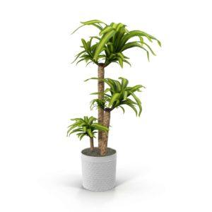 Planta Interior 3D con Macetero