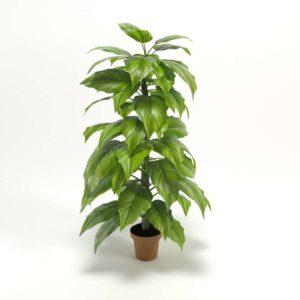 Planta Interior 3D Philodendron Grande