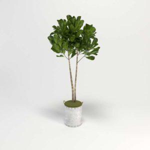 Planta Interior 3D Maceta de Estaño