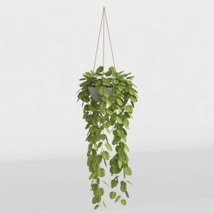 Modelo 3D Planta Suculenta Colgante